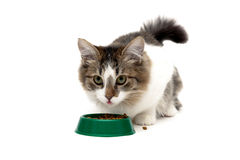 Fluffy cat eating food from a bowl Stock Images