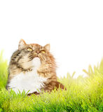 Fluffy cat in grass on white background Stock Images