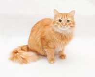 Fluffy cat with green eyes sits and stares Stock Images
