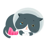 Fluffy cat injury splinting leg  illustration Royalty Free Stock Images