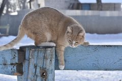 Fluffy cat jumping off the fence Royalty Free Stock Photos