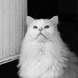 Fluffy cat. Look in the sky, Fluffy cat Stock Photos