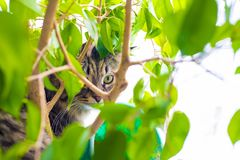 Fluffy cat. Looking through the green plant royalty free stock photos