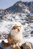 Fluffy cat outside in winter mountains Stock Images