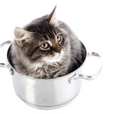 Fluffy cat in a pan. Stock Image