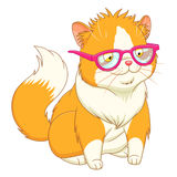 Fluffy cat in pink glasses Stock Image