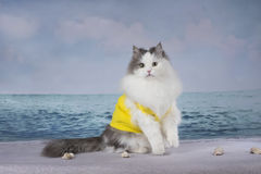 Fluffy cat playing on the beach on a sunny day Stock Images