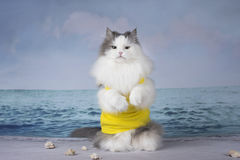 Fluffy cat playing on the beach on a sunny day Royalty Free Stock Images