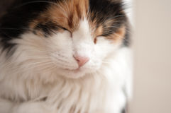 Fluffy cat portrait Stock Photos