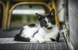 Fluffy cat relaxing Stock Images