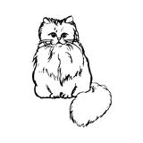 Fluffy cat sitting Stock Image