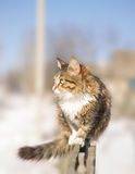 Fluffy cat sitting on a fence in winter Stock Photo