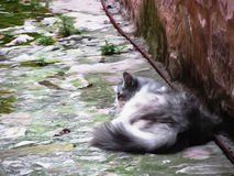 Fluffy cat sleeping crouch on the floor . Artistic representation.  Royalty Free Stock Photography