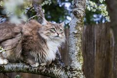 Fluffy cat in spring Royalty Free Stock Photos