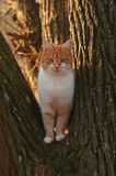 fluffy cat standing on a tree, looking into camera Stock Photo