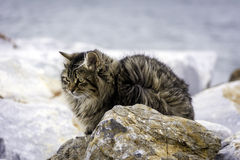 Fluffy cat on the street Stock Image