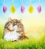 Fluffy cat in sunny garden grass looking at hanging  easter eggs Stock Image
