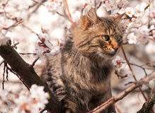 Fluffy cat on a tree Royalty Free Stock Images