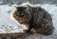 Fluffy cat. Fluffy cat watches its prey sitting on a log Stock Photography