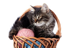 Fluffy cat in a wattled basket with woolen balls. Royalty Free Stock Photography