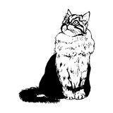 Fluffy cat on a white background Royalty Free Stock Images