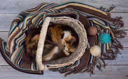Fluffy cat in a wicker basket on a wooden surface Stock Photos