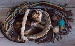 Fluffy cat in a wicker basket on a wooden surface Royalty Free Stock Photos