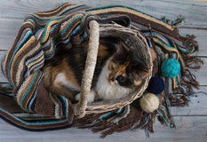 Fluffy cat in a wicker basket on a wooden surface Stock Photo