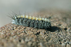 Fluffy caterpillar on a stone close Stock Photo