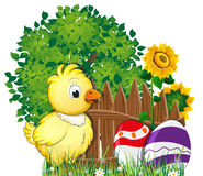 Fluffy chicken and painted Easter eggs. Little fluffy chicken and painted Easter eggs in the meadow with flowers near a tree Stock Images