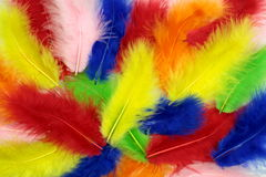 Fluffy colorful feathers background Royalty Free Stock Images