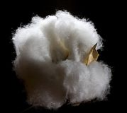 Fluffy cotton Royalty Free Stock Images