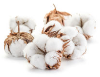 Fluffy cotton ball of cotton. Royalty Free Stock Photography