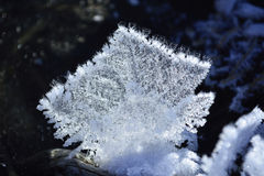 Fluffy crystal frost Royalty Free Stock Photo