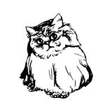 Fluffy cute cat Stock Images