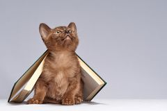 The kitten is hiding under the book royalty free stock image