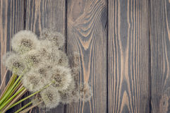 Fluffy dandelions and natural wood Stock Photos