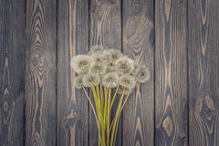 Fluffy dandelions and natural wood Stock Photography