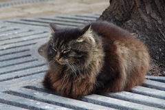 Fluffy dark cat. On a spring street royalty free stock photos