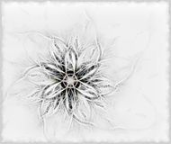 fluffy delikatny kwiat Obrazy Royalty Free