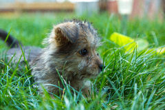 Fluffy dog in grass Stock Photos