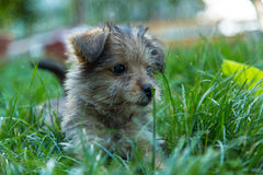 Fluffy dog in grass Stock Image
