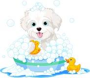 Fluffy dog having a bath. White fluffy dog having a soapy bath royalty free illustration