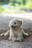 Fluffy dog Stock Images