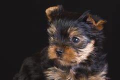 Fluffy dog Stock Photos