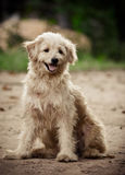 Fluffy dog Royalty Free Stock Photography