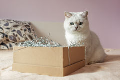 Fluffy domestic cat sitting in bedroom Stock Photos