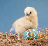 Fluffy Easter chick in hay Royalty Free Stock Photography
