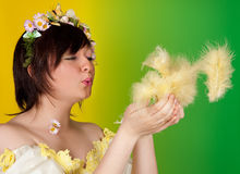 Fluffy easter feathers in springtime Stock Photography