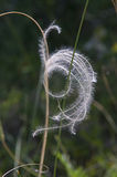 Fluffy feather grass Royalty Free Stock Images